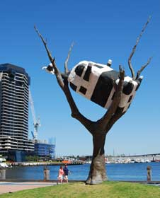 Cow up a Tree at Docklands